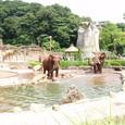 アフリカゾウその2